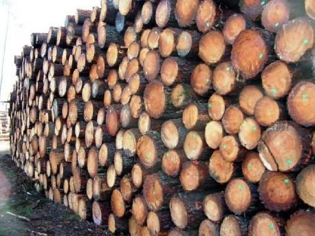 加拿大松木圆木