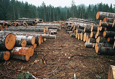 椴木原木价格-中国木材网:东北原木价格行情