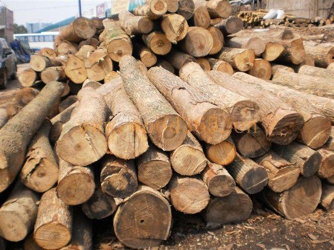 中国原木网上展厅_原木图片,产品介绍-中国木材网!