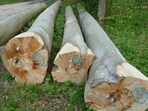 欧洲榉木烘干板价格-中国木材网:欧洲进口木枋价格