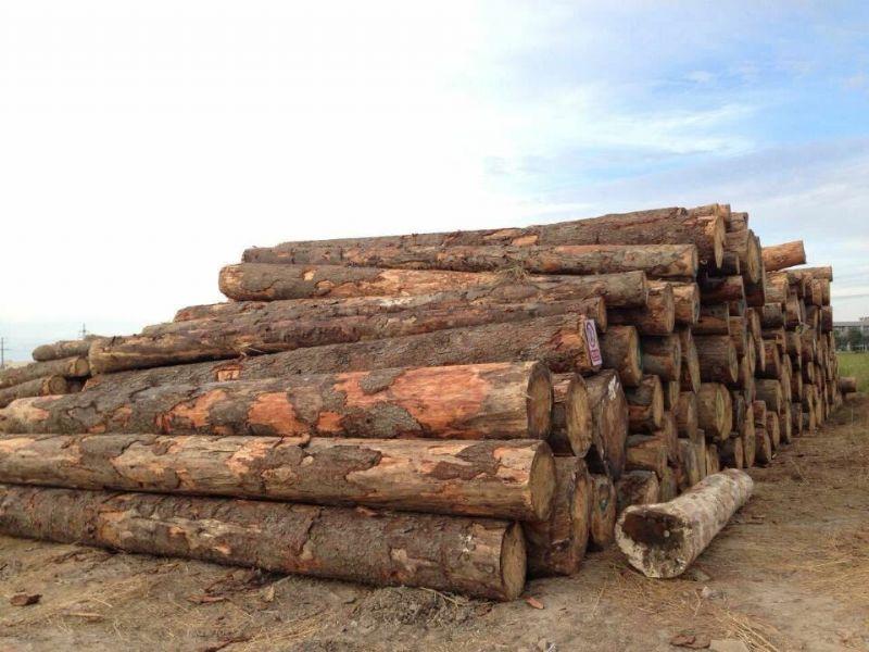 产品名称:美国,欧洲进口松木原木产品规格:直径30-95,长度4-6m,AB等级。产品描述:松木家具被联合国人文部定为环保家具,且实用性强,经久耐用。我司现拥有罗马尼亚进口松木,油脂含量低,色彩干净漂亮,纹理顺直美观,价格合理,数量有限,有意者请致电咨询。
