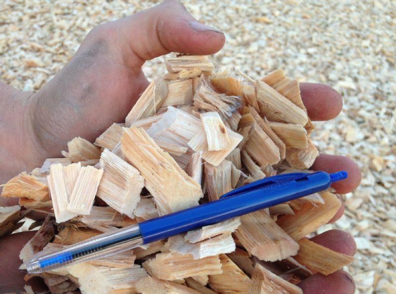 进口桉木片