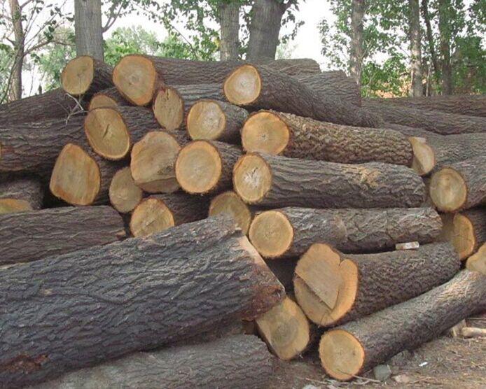 出售国内榆木原木