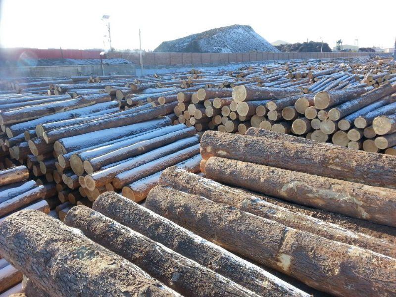 红松 中国木材网