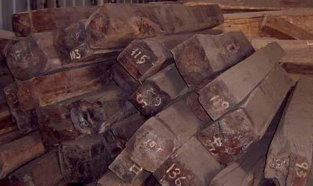 中国式夺掠全球红木资源夸大其词_木业资讯-中国木材网