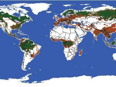 中国人均森林面积排名_人均耕地面积排名图片