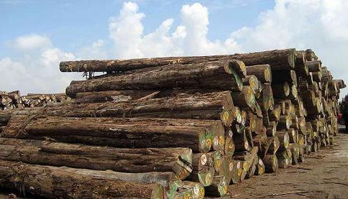木材百科—缅甸柚木