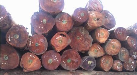 2009年12月浙江嘉善开华国际木材市场木枋价格行情