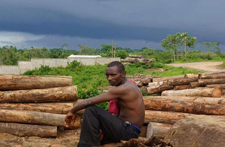 非洲私人木材堆场