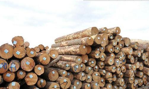2015年木材市场行情何时能好转?