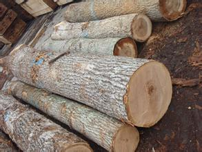 白橡与黄橡颜色区别_橡胶木与红橡木区别 橡木和红橡木有什么分别