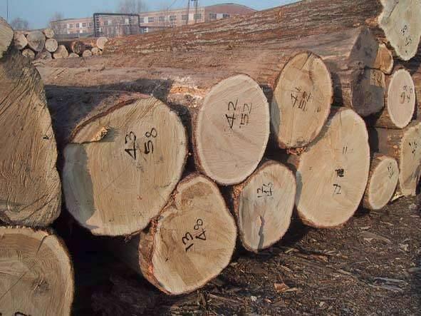柞木的纹理细密,树皮呈棕灰色,木材比较重.